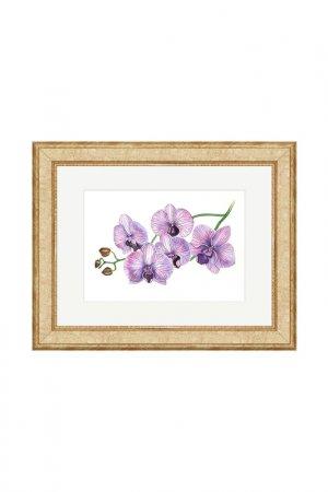 Картина Фаленопсис: Бали OLGA GLAZUNOVA. Цвет: фиолетовый